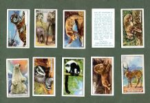 Collectible cigarette cards set Wild Animals by Gallaher